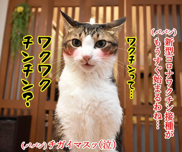 新型コロナワクチン接種が始まるのよッ 猫の写真で4コマ漫画 1コマ目ッ
