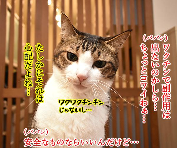 新型コロナワクチン接種が始まるのよッ 猫の写真で4コマ漫画 3コマ目ッ