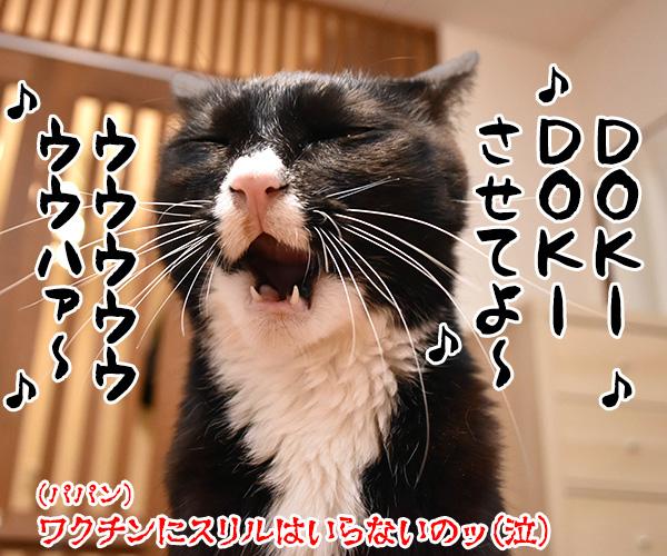 新型コロナワクチン接種が始まるのよッ 猫の写真で4コマ漫画 4コマ目ッ