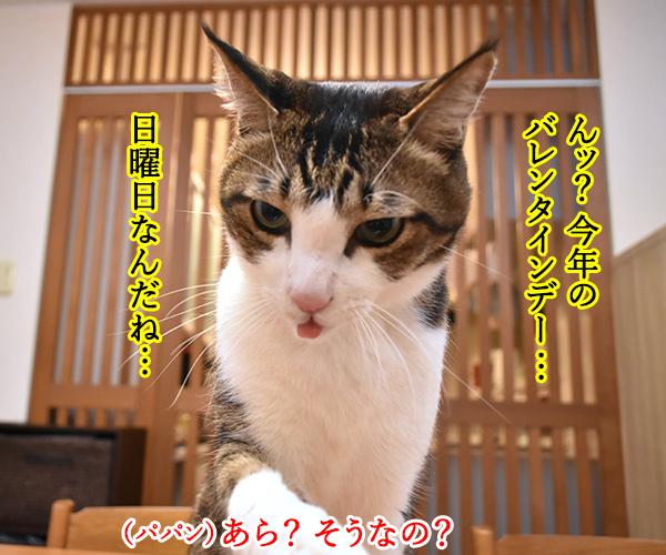 今年のバレンタインデーは日曜日なのッ 猫の写真で4コマ漫画 1コマ目ッ