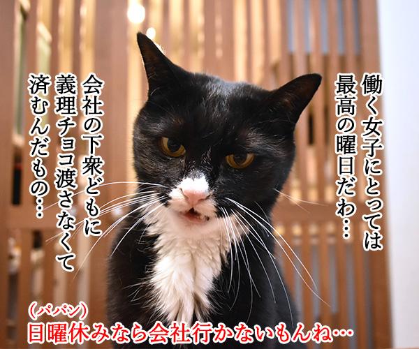 今年のバレンタインデーは日曜日なのッ 猫の写真で4コマ漫画 2コマ目ッ