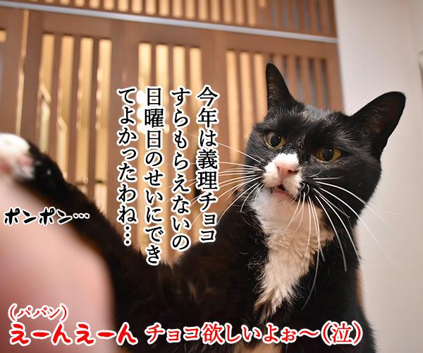 今年のバレンタインデーは日曜日なのッ 猫の写真で4コマ漫画 3コマ目ッ