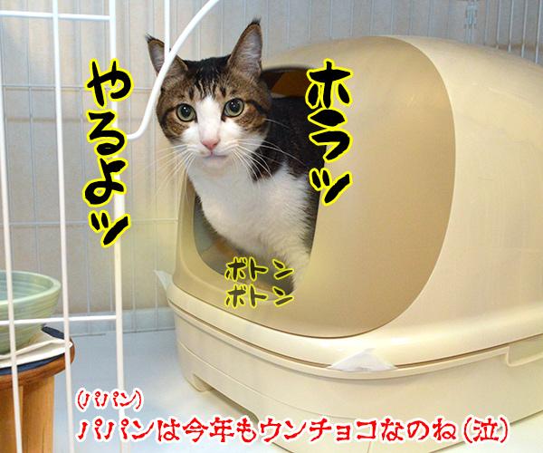 今年のバレンタインデーは日曜日なのッ 猫の写真で4コマ漫画 4コマ目ッ