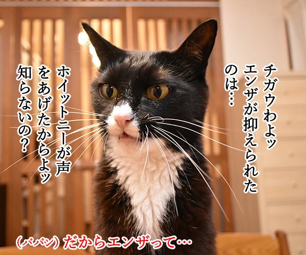 インフルエンザが流行してない理由って? 猫の写真で4コマ漫画 3コマ目ッ