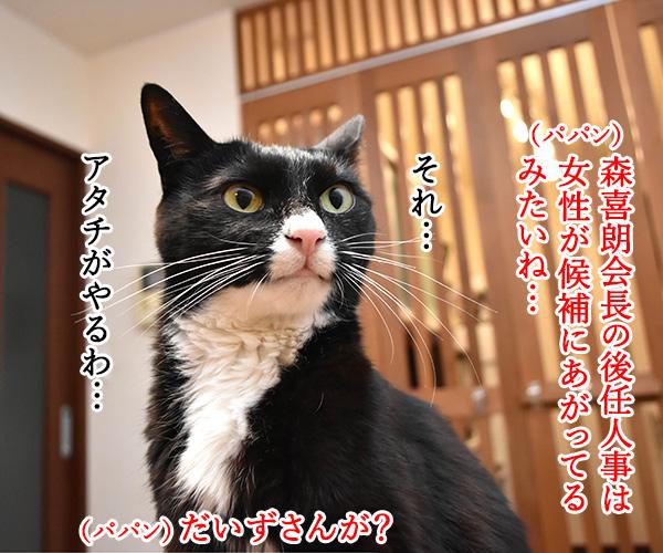 森喜朗会長の後任人事は女性になるのかしら? 猫の写真で4コマ漫画 1コマ目ッ