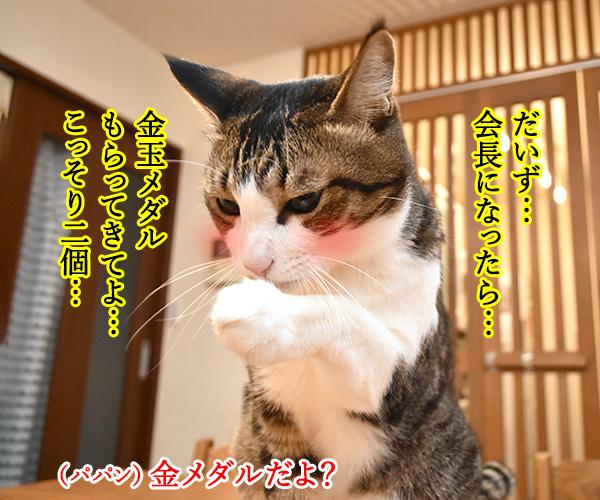 森喜朗会長の後任人事は女性になるのかしら? 猫の写真で4コマ漫画 2コマ目ッ