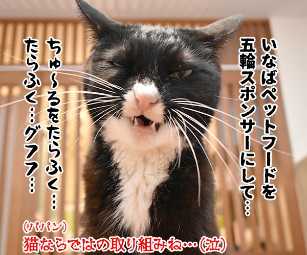 森喜朗会長の後任人事は女性になるのかしら? 猫の写真で4コマ漫画 4コマ目ッ
