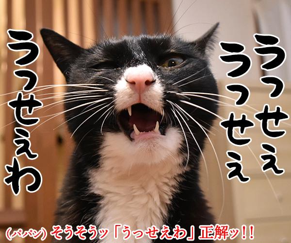ヤングに大人気の「Ado」って知ってる? 猫の写真で4コマ漫画 4コマ目ッ
