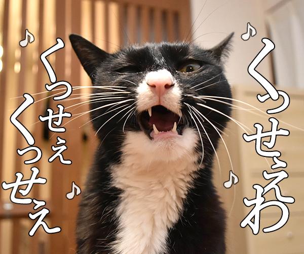 ウンチョスがクサイから「うっせえわ」を唄うのよッ 猫の写真で4コマ漫画 2コマ目ッ