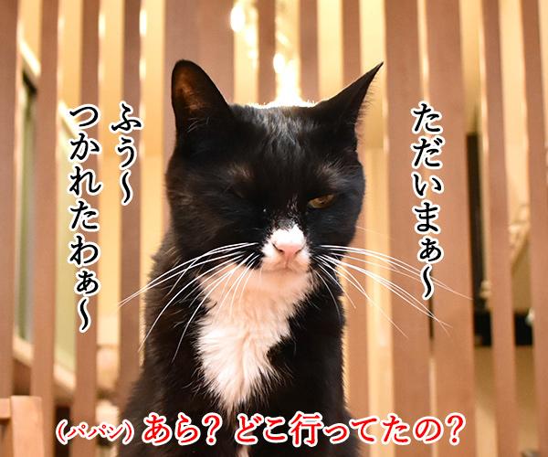 日本三大祭りの一つ 猫の写真で4コマ漫画 1コマ目ッ