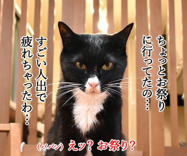 日本三大祭りの一つ 猫の写真で4コマ漫画 2コマ目ッ
