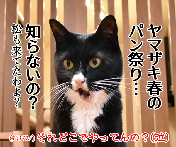 日本三大祭りの一つ 猫の写真で4コマ漫画 4コマ目ッ