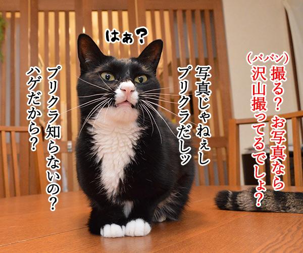 プリクラ撮りに行きたいのッ 猫の写真で4コマ漫画 2コマ目ッ