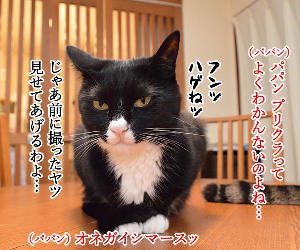 プリクラ撮りに行きたいのッ 猫の写真で4コマ漫画 3コマ目ッ