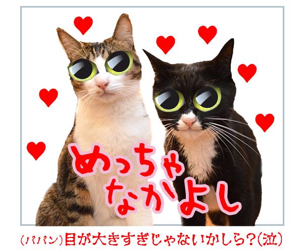 プリクラ撮りに行きたいのッ 猫の写真で4コマ漫画 4コマ目ッ