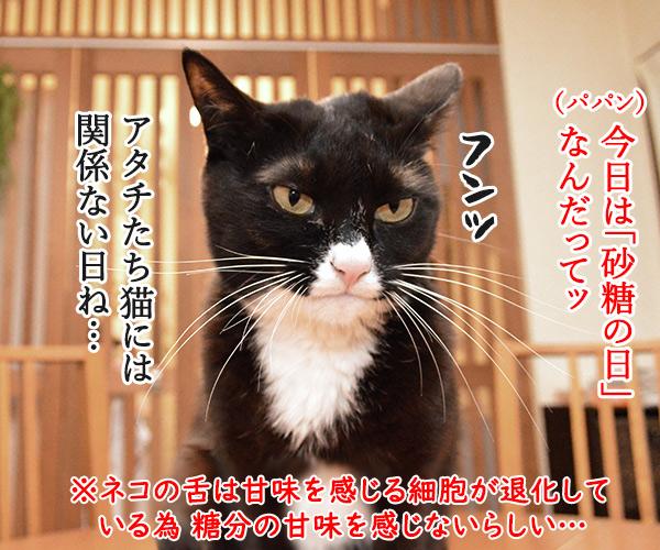 今日は「砂糖の日」なんだってッ 猫の写真で4コマ漫画 1コマ目ッ