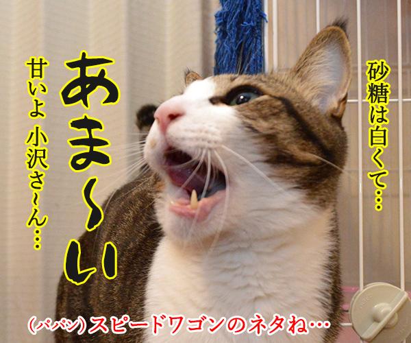 今日は「砂糖の日」なんだってッ 猫の写真で4コマ漫画 2コマ目ッ