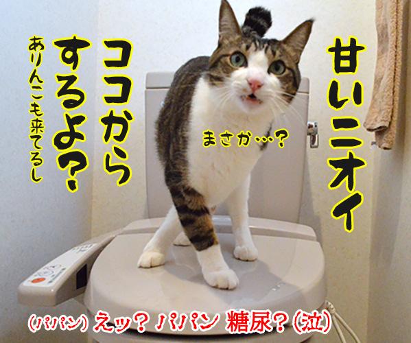 今日は「砂糖の日」なんだってッ 猫の写真で4コマ漫画 4コマ目ッ