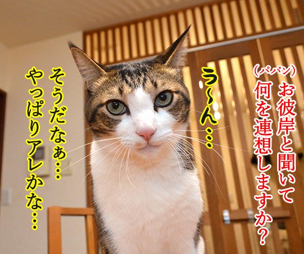 お彼岸といえば? 猫の写真で4コマ漫画 1コマ目ッ