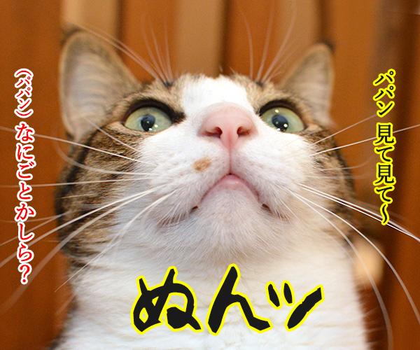 そろそろシーズン到来なのねッ 猫の写真で4コマ漫画 1コマ目ッ