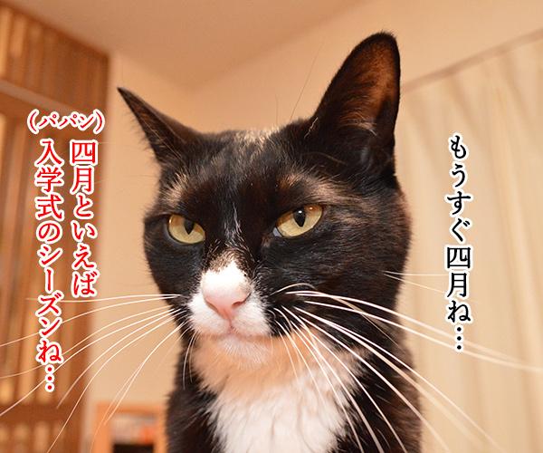もうすぐ入学式シーズンよねッ 猫の写真で4コマ漫画 1コマ目ッ