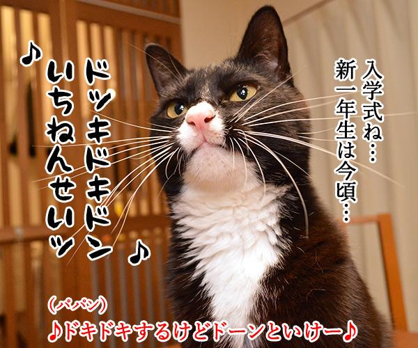 もうすぐ入学式シーズンよねッ 猫の写真で4コマ漫画 2コマ目ッ