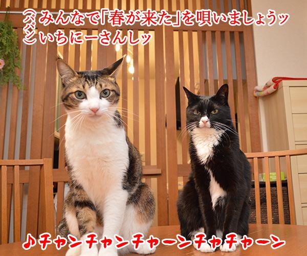 さあ みんなで『春が来た』を唄いましょーッ(1番) 猫の写真で4コマ漫画 1コマ目ッ