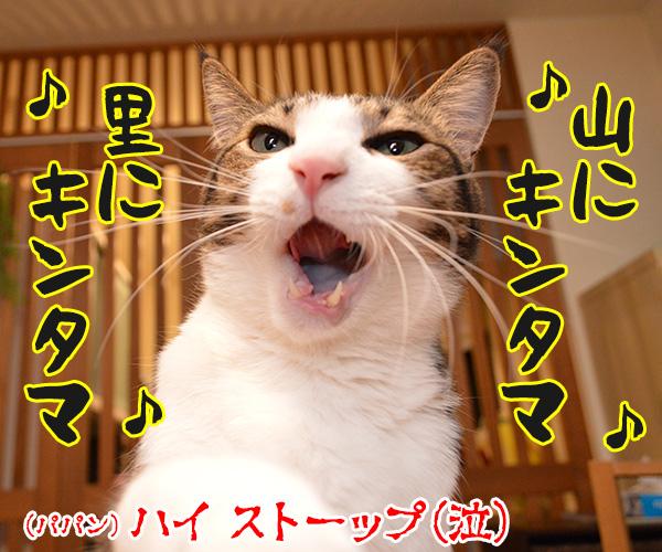 さあ みんなで『春が来た』を唄いましょーッ(1番) 猫の写真で4コマ漫画 4コマ目ッ