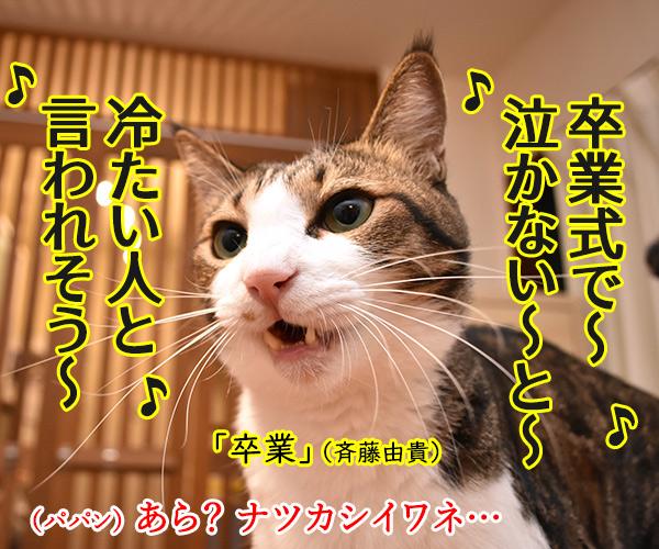 卒業式… あの頃に戻りたいのッ 猫の写真で4コマ漫画 1コマ目ッ