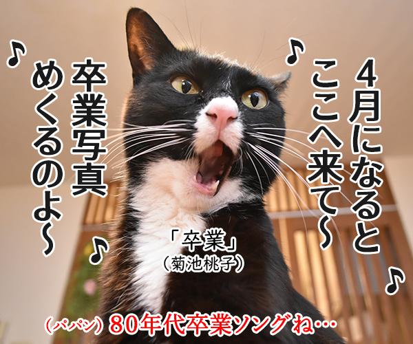 卒業式… あの頃に戻りたいのッ 猫の写真で4コマ漫画 2コマ目ッ