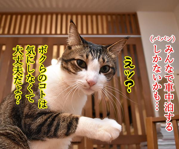 大災害発生 猫さんと避難するときはどうする? 猫の写真で4コマ漫画 2コマ目ッ