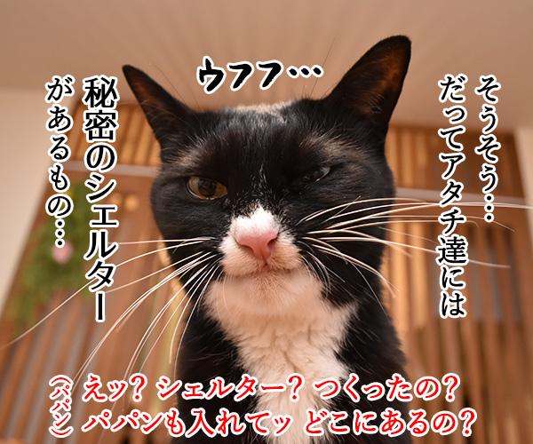 大災害発生 猫さんと避難するときはどうする? 猫の写真で4コマ漫画 3コマ目ッ