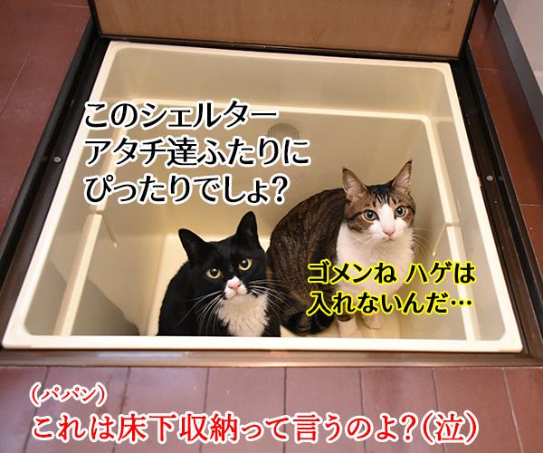 大災害発生 猫さんと避難するときはどうする? 猫の写真で4コマ漫画 4コマ目ッ