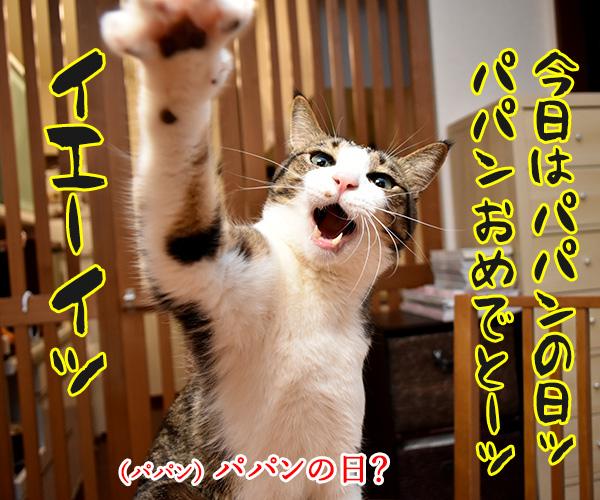 今日はパパンの日なんですってッ 猫の写真で4コマ漫画 1コマ目ッ