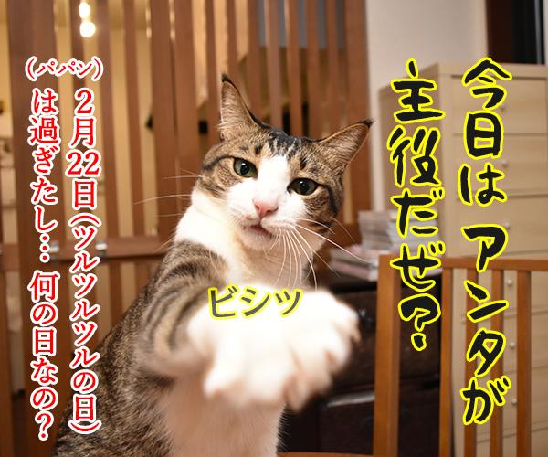 今日はパパンの日なんですってッ 猫の写真で4コマ漫画 2コマ目ッ