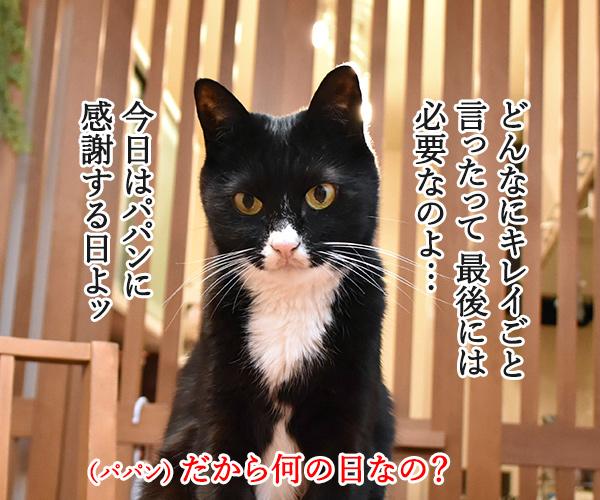 今日はパパンの日なんですってッ 猫の写真で4コマ漫画 3コマ目ッ