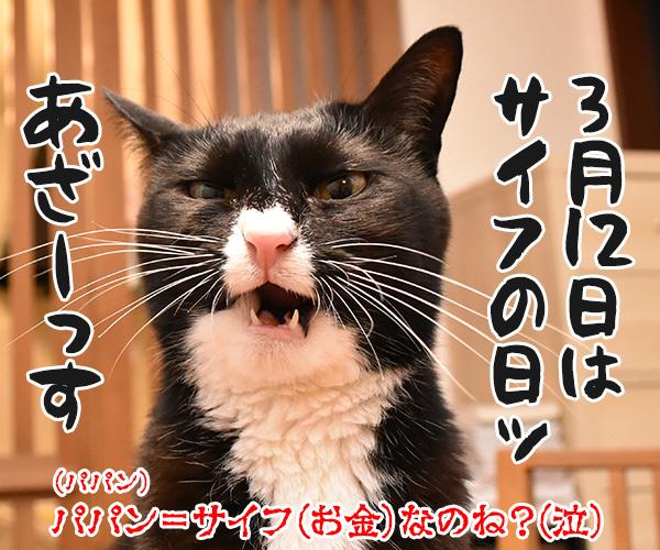 今日はパパンの日なんですってッ 猫の写真で4コマ漫画 4コマ目ッ