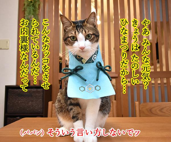 きょうはたのしいひな祭り 猫の写真で4コマ漫画 1コマ目ッ