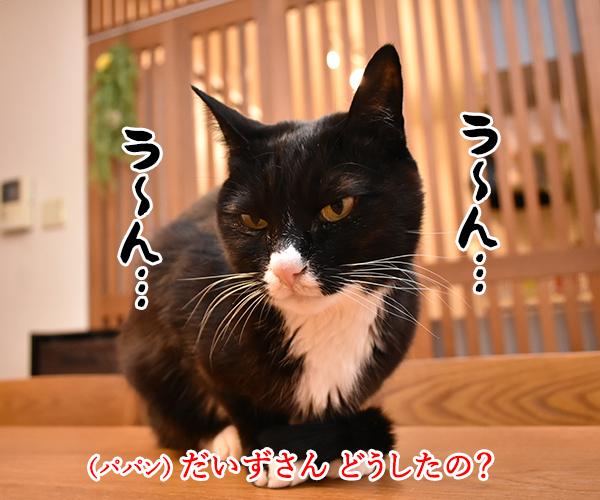 3月9日だから考え事しちゃうの… 猫の写真で4コマ漫画 1コマ目ッ
