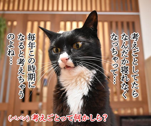 3月9日だから考え事しちゃうの… 猫の写真で4コマ漫画 2コマ目ッ