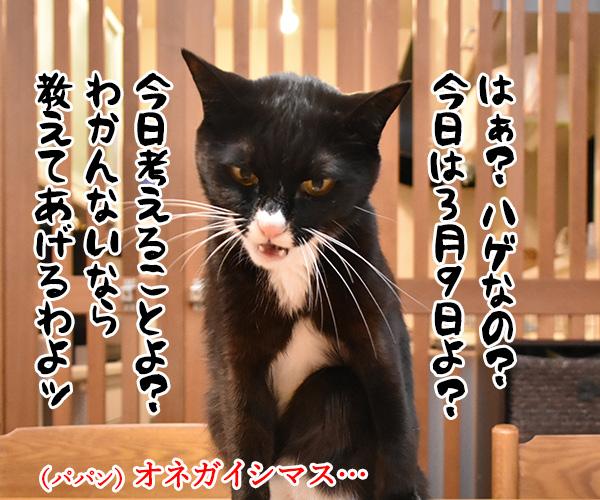 3月9日だから考え事しちゃうの… 猫の写真で4コマ漫画 3コマ目ッ