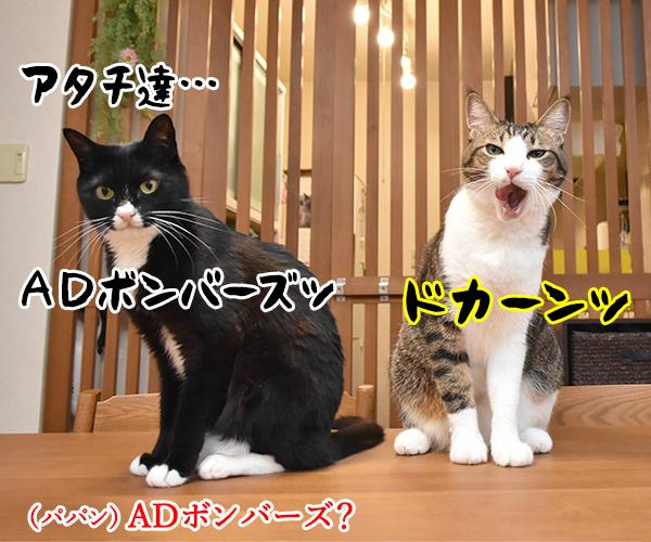 アタチ達ッ ADボンバーズなのッ 猫の写真で4コマ漫画 1コマ目ッ