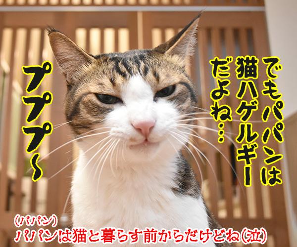 アタチ達ッ ADボンバーズなのッ 其の二 猫の写真で4コマ漫画 10コマ目ッ