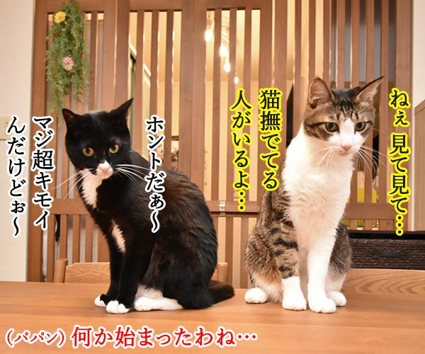 アタチ達ッ ADボンバーズなのッ 猫の写真で4コマ漫画 2コマ目ッ