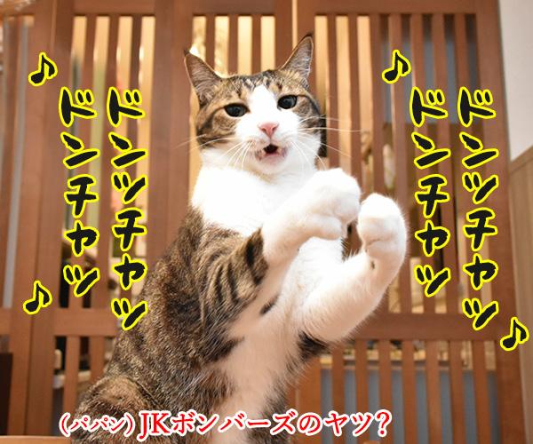 アタチ達ッ ADボンバーズなのッ 猫の写真で4コマ漫画 4コマ目ッ