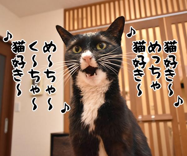 アタチ達ッ ADボンバーズなのッ 其の二 猫の写真で4コマ漫画 5コマ目ッ