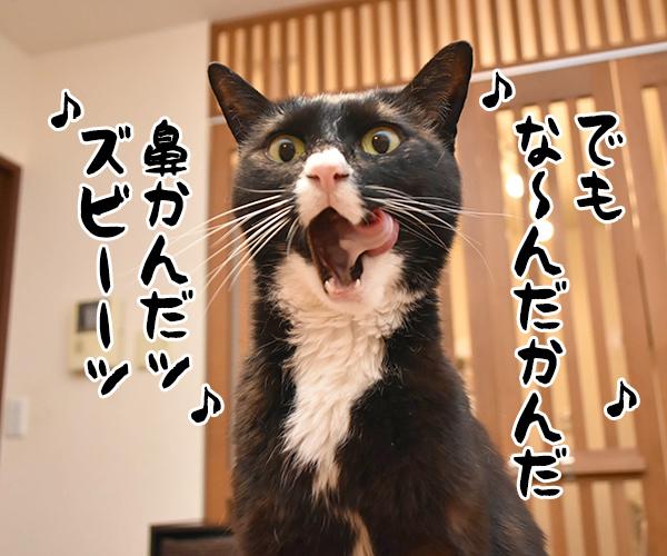 アタチ達ッ ADボンバーズなのッ 其の二 猫の写真で4コマ漫画 7コマ目ッ