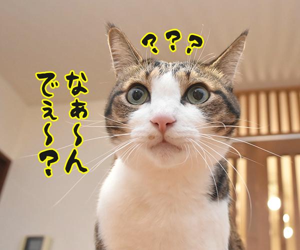 アタチ達ッ ADボンバーズなのッ 其の二 猫の写真で4コマ漫画 8コマ目ッ