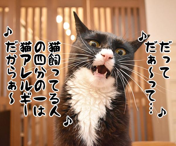 アタチ達ッ ADボンバーズなのッ 其の二 猫の写真で4コマ漫画 9コマ目ッ