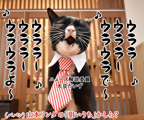 「時短命令は違憲」で都を提訴なのよッ 猫の写真で4コマ漫画 3コマ目ッ
